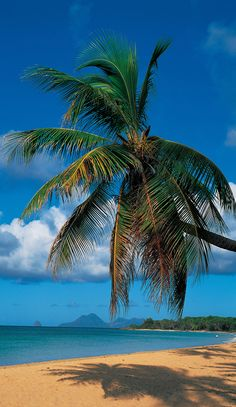 Amazing Martinique - - http://www.travelandtransitions.com/destinations/destination-advice/latin-america-the-caribbean/