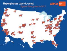 Over the course of 2015, the ASPCA granted more than $1 million in equine-related grants to 124 organizations nationwide to support their efforts to rescue and rehabilitate horses.