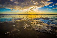 """White Starfish at Sunrise"" in New Smyrna Beach, Florida"