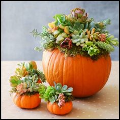 Pumpkin Succulent Harvest Decoration