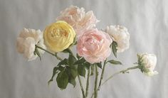 """Katie G. Whipple, """"A Study of Peonies,"""" oil on prepared paper, 11 x 20 inches Paul Klee, Grand Central Atelier, Florence Academy Of Art, Peony Painting, Graphite Drawings, Happy Independence, Contemporary Paintings, Watercolor Illustration, Still Life"""