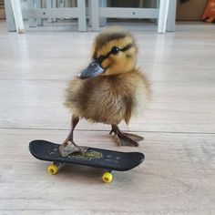 Baby Animals Super Cute, Cute Little Animals, Cute Funny Animals, Pet Ducks, Baby Ducks, Baby Animals Pictures, Cute Animal Pictures, Fluffy Animals, Animals And Pets