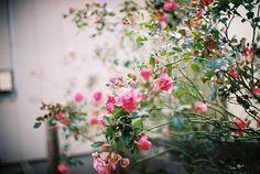 by Kumiko_oMochi on Flickr.