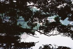 Tree on water surface