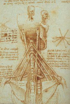 Leonardo Da Vinci-Anatomie des Halses