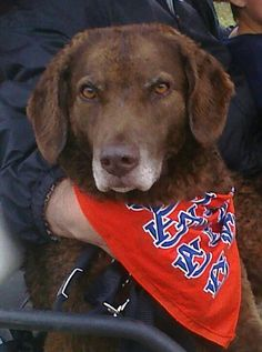 Lulu is gorgeous! Thank you for sharing Stacy! #aualumnitent I keep seeing pet photos, so I'm sharing Lulu...she loves, loves, loves going to Auburn and she really loves football season (people throwing and running with balls!!)!! War Eagle!