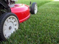 Spring mowing tips & Bagging vs. Mulching