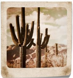 Digital Download Photograph Vintage Desert Cactus by LEXIBAGS, $3.00