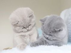 Cute Kittens Playing together...