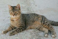 MANDI - Gato adoptado - AsoKa el grande