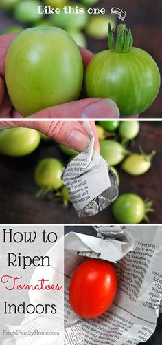 Do you have lots of green tomatoes hanging around in your garden? Here's how I get them to ripen up indoors.
