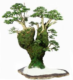 The upright styles in bonsai are one of the most popular and easy styles for beginners. Learn all about the two main upright styles in bonsai growing. Bonsai Seeds, Bonsai Plants, Bonsai Garden, Succulents Garden, Cactus Plants, Ikebana, Terrariums, Bonsai Forest, Bonsai Styles
