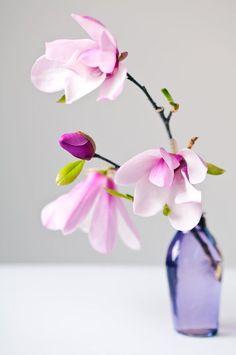 PensieriDifettosi, gyclli: Pink magnolia ♥