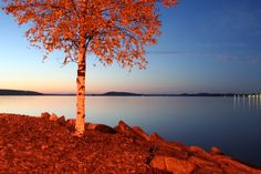 Vesijärvi - I think this is reason to go to Lahti. Finland, To Go, Europe, Autumn, Sunset, Landscape, Places, Outdoor, Outdoors