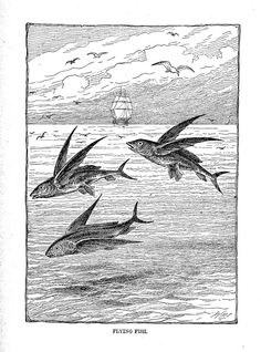 "Flying Fish, illustration from ""The pet of the family stories, sketches, poems and pictures for the youth,"" 1856"