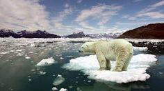 Image result for global warming