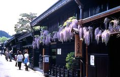 JNTO - Official Tourism Guide for Japan Travel