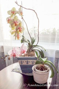 These tips for growing orchids are the BEST! I always thought orchids were difficult to grow. Now that I know they're not, I'll be buying some for house plants. Definitely pinning!