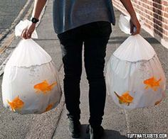 Goldfish trash bags These novelty goldfish trash bags are guaranteed to make your neighbours look twice. They come in a pack of 18 and are 100% biodegradable. Take out the garbage in style and scare the crap out of your garbage man. BUY IT HERE