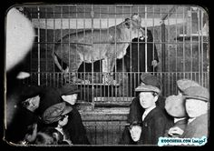 Old Circus in Newcastle 1910-1930