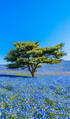 bleu - https://zemaria.fr/ Lone Tree, Beautiful Places To Visit, Beautiful World, Beautiful Landscapes, Felder, Something Beautiful, Champs, Terra, Belleza Natural