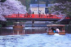 岡崎疎水 Cherry blossoms SAKURA in Kyoto JAPAN