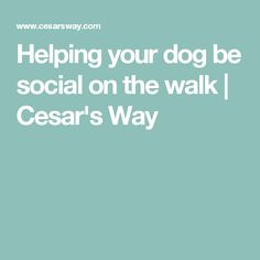 Helping your dog be social on the walk | Cesar's Way