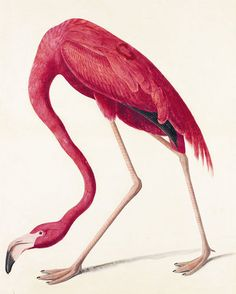 pink flamingo.My Grandmother loved them!