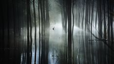 Winner of place in the Amateur Landscape category: Mariano Belmar Torrecilla - The swamp 2 Photography Awards, Fine Art Photography, Landscape Photography, Silhouette Art, Nature Images, Art Direction, Surrealism, Gallery, Inspiration