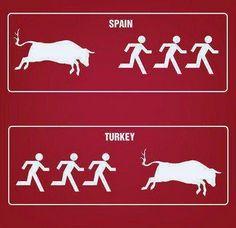 İspanya ve Türkiye'den Boğa Manzaraları