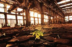 A seedling emerges in an abandoned train yard. National Geographic 2013 Photography Contest entry by Sarah Neal