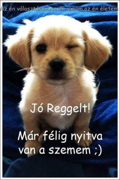 Retro Hits, Bichon Frise, Jaba, Good Morning, Labrador Retriever, Cute Animals, Jokes, Puppies, Funny