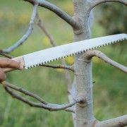 Πότε και πώς γίνεται το κλάδεμα της δαμασκηνιάς   Τα Μυστικά του Κήπου Garden Tools, Gardening, Yard Tools, Lawn And Garden, Horticulture