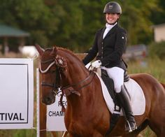 Fine Fellow 2 - Imported Westphalian gelding that is a great horse for the ambitious rider. Schooling everything to Prix St-Georges. Reserve Champion Region 8 AA at Second level! $85,000
