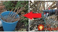 Po čistení záhrady im ostalo plno konárov a prútia: Všetci susedia naokolo ho spálili, keď však uvideli nápad týchto manželov ľutovali, že im nenapadlo toto! Nature Crafts, Plants, Decor, Gardening, Projects, Noel, Garten, Decoration, Decorating
