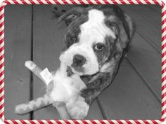 Vet Tech Students Warn Pet Owners of Holiday Hazards #Ilovedogs