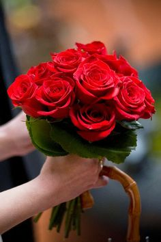 Petite Wedding Bouquet Arranged With: Red Roses + Green Foliage Love Rose, My Flower, Pretty Flowers, Red Flowers, Wedding Bouquets, Wedding Flowers, Bridesmaid Bouquets, Red Rose Bouquet, Beautiful Red Roses