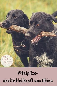 (Display) Horse Kiosk – Onlineshop for Nutritional Supplements - Cats and Dogs House Nutritional Supplements, Dog Bed, Animals And Pets, Dog Food Recipes, Labrador Retriever, Stuffed Mushrooms, Horses, Dogs, Leather