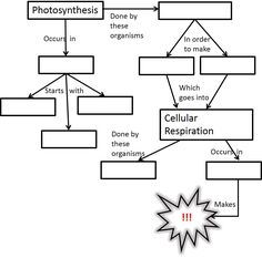 Cellular Respiration Diagram Worksheet | Photosynthesis And ...
