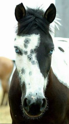 This horse has a beautiful face.