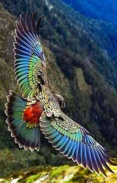 Parrot found only in the South Island of New Zealand and the only alpine pa… Kea. Parrot found only in the South Island of New Zealand and the only alpine parrot in the world! Pretty Birds, Love Birds, Beautiful Birds, Animals Beautiful, Beautiful Butterflies, Beautiful Pictures, Animals Amazing, Beautiful Gorgeous, Amazing Photos