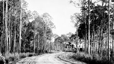Early road between Mount Dora and Tavares - Lake County, Florida