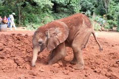 12 years until elephants are all wiped out