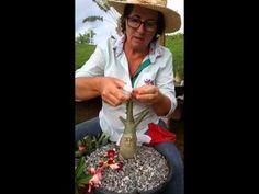 Rosa do Deserto - Anomalia Genética - YouTube