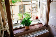 Yasar Ceviker & Susi Streich — Fashion Designer, Apartment & Studio, Neuhausen, Munich. Potted Plants, Cactus Plants, Herbs Garden, Window View, Homestead, Crib, Balcony, Designer, Florals