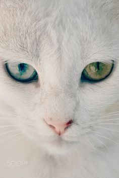 So intriguing when cats have 2 different coloured eyes!
