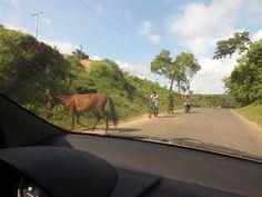 Animales sueltos en la ruta II