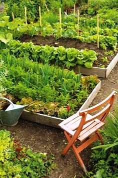 Don't worry about not having enough space as you can have a vegetable garden even on your deck or balcony. Let us show you how easy it can be… #vegetable_gardening