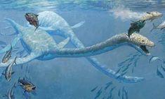 Elasmosaur.fin.sm.jpg (550×333)