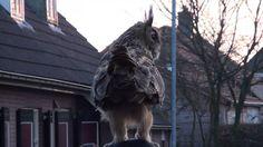 Oehoe landt bij Marianne op het Hoofd ( Noordeinde) No terror Eagle Owl